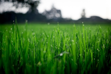 How to Make Your Lush Lawn Thicker